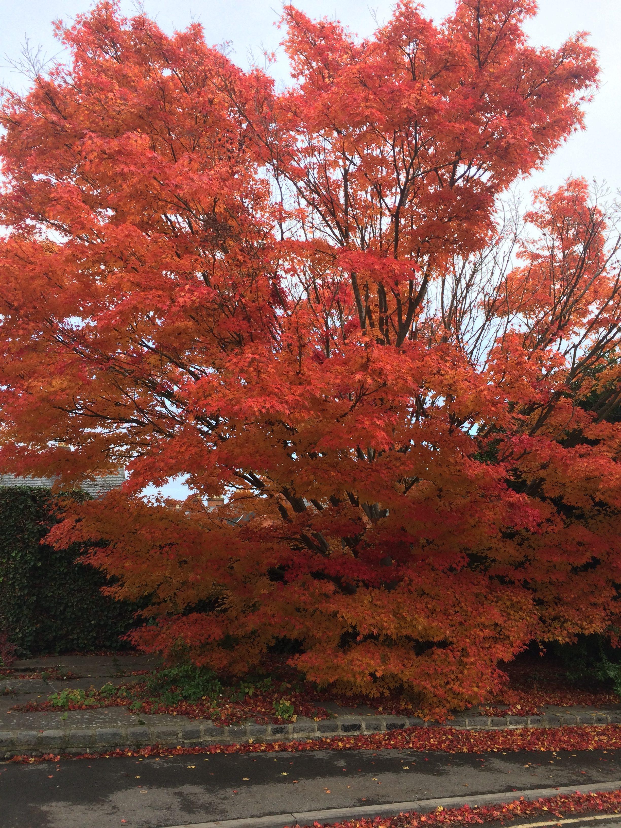 autumn inspiration, interior design oxfordshire, interior design berkshire, award winning interior designer,